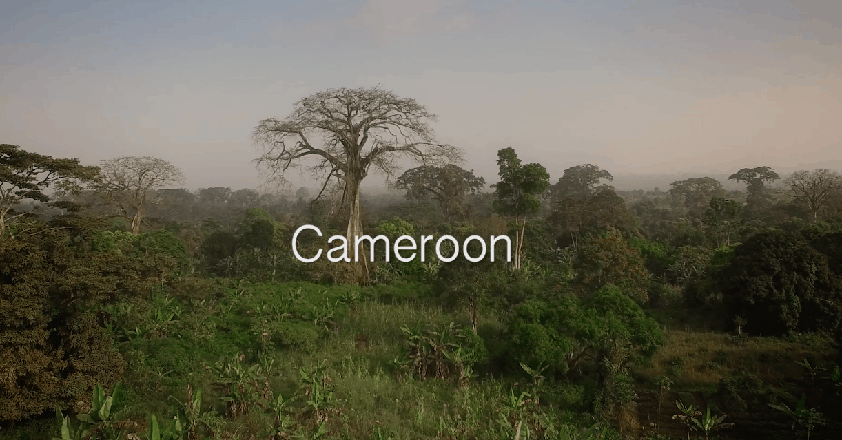Cameroon Ministry Landscape